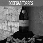 Bodegas Torres Experience