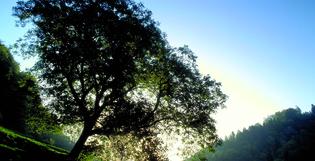 Label Imprim'Vert : Doublet renouvelle son engagement pour le développement durable en 2019 !